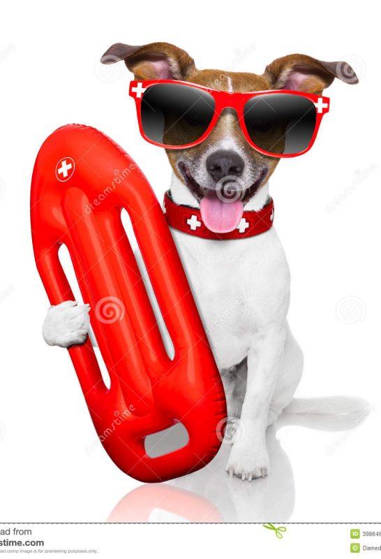 lifeguard-dog